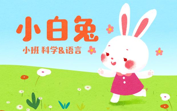 小白兔PPT教學教案